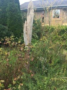 Photo: gorgeously overgrown herb garden