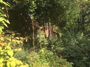 Photo: trees at the edge of a garden wall